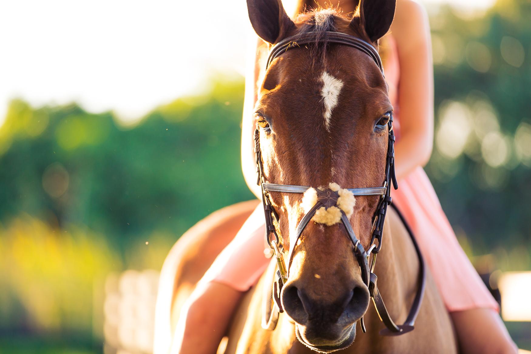 EquestrianPortraitPhotography-11.jpg