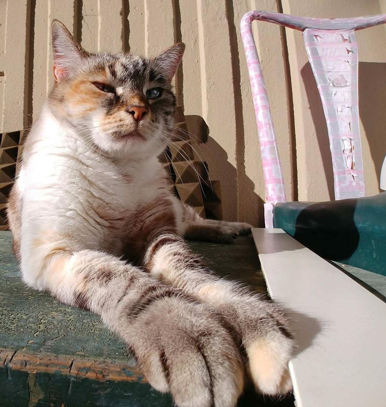 Irene  Mascotte dello studio!    Cosa mi piace: L'umido della Hills, il divano dello studio, Romeo degli aristogatti.      Cosa non mi piace: Stare da sola, quando mi prendono in braccio, i croccantini e Garfield.