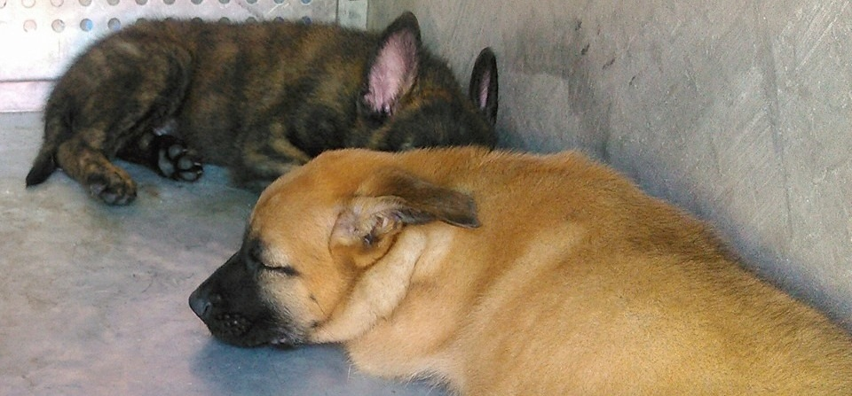 puppies_sleep.jpg
