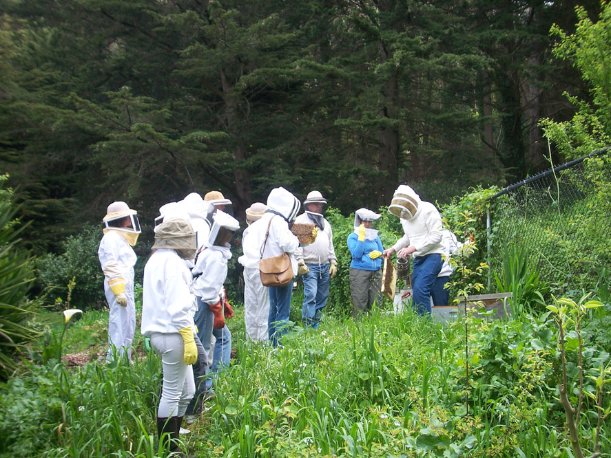 Click Here - To go to the San Francisco Beekeepers Association