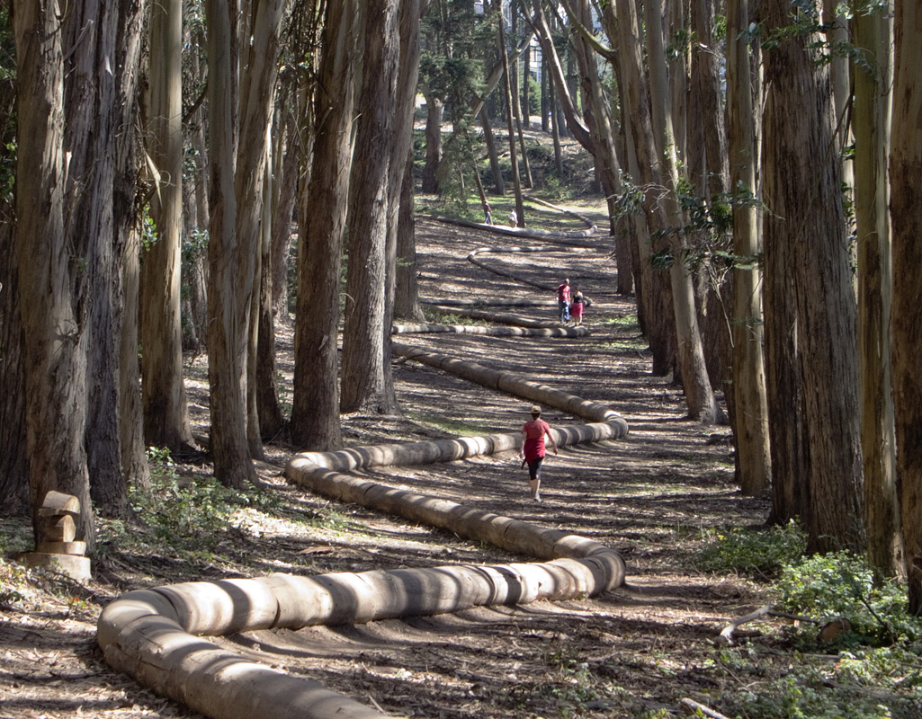 Andy Goldsworthy's Wood Line near Lover's Lane