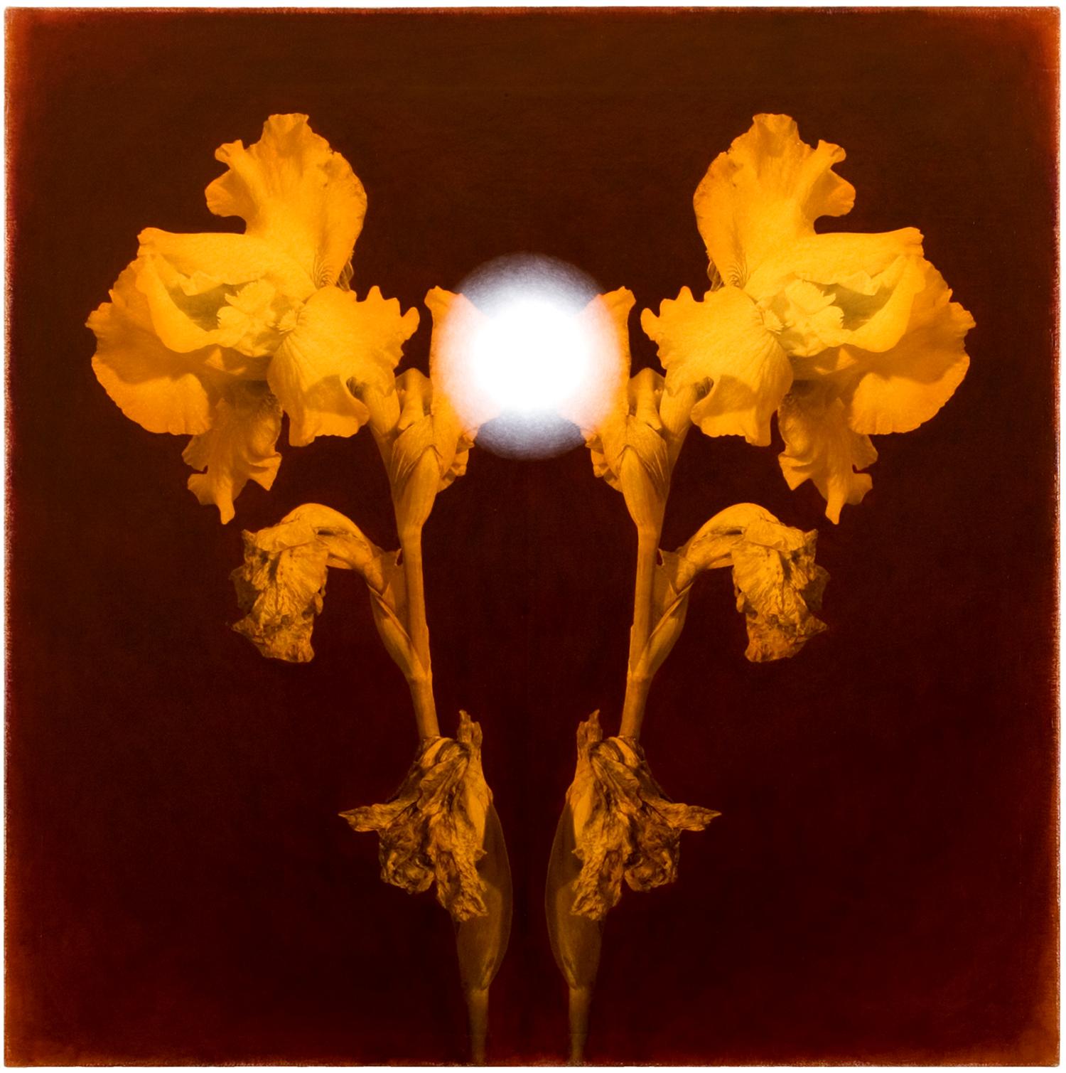 Iris #7, 2005