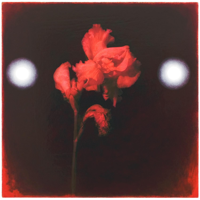 Iris #6, 2005