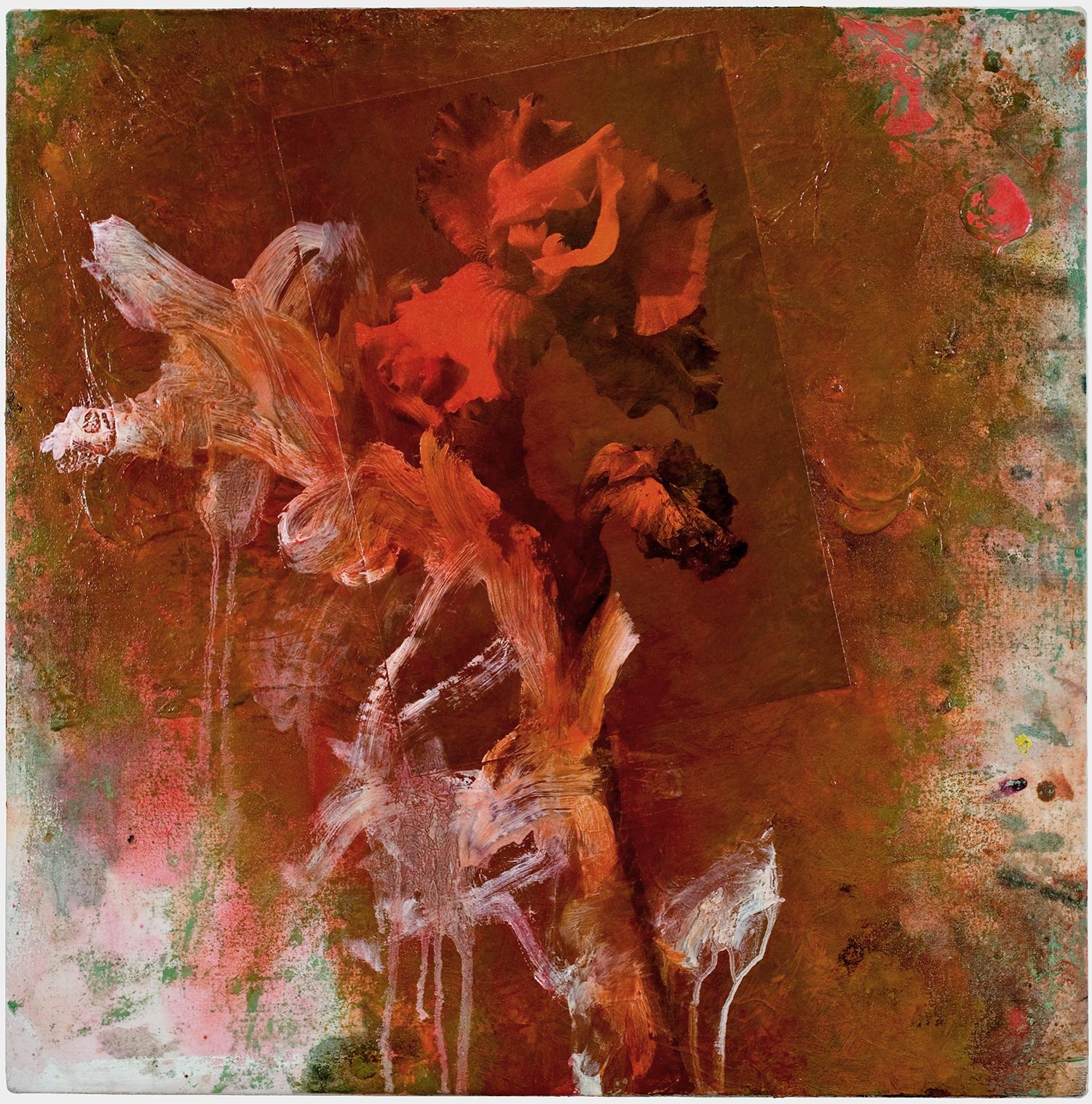 Iris #13, 2005
