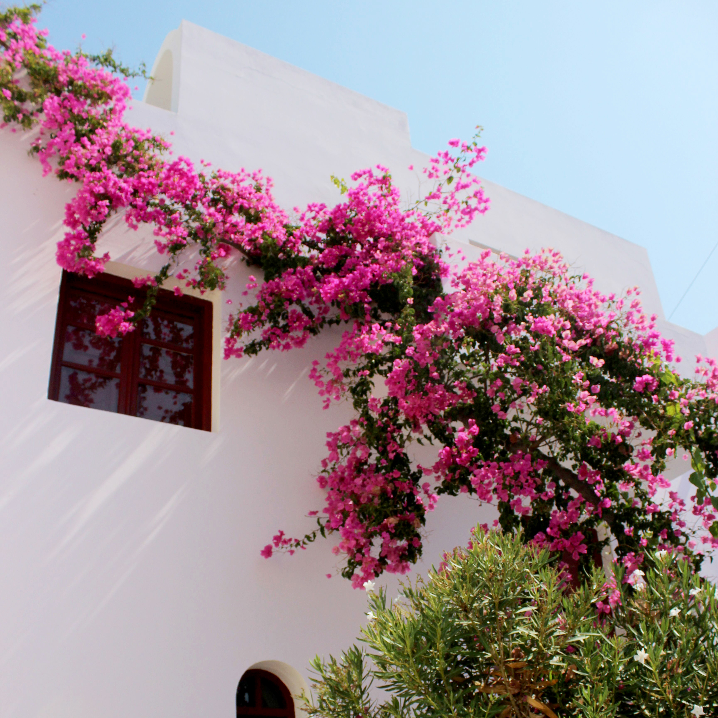 The more bougainvilleas, the better!