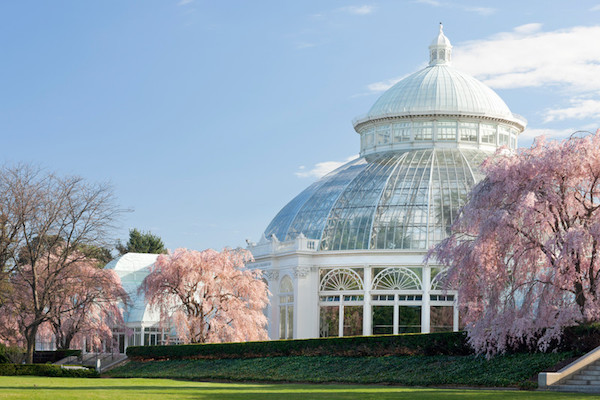 I mage Source:  New York Botanic Garden