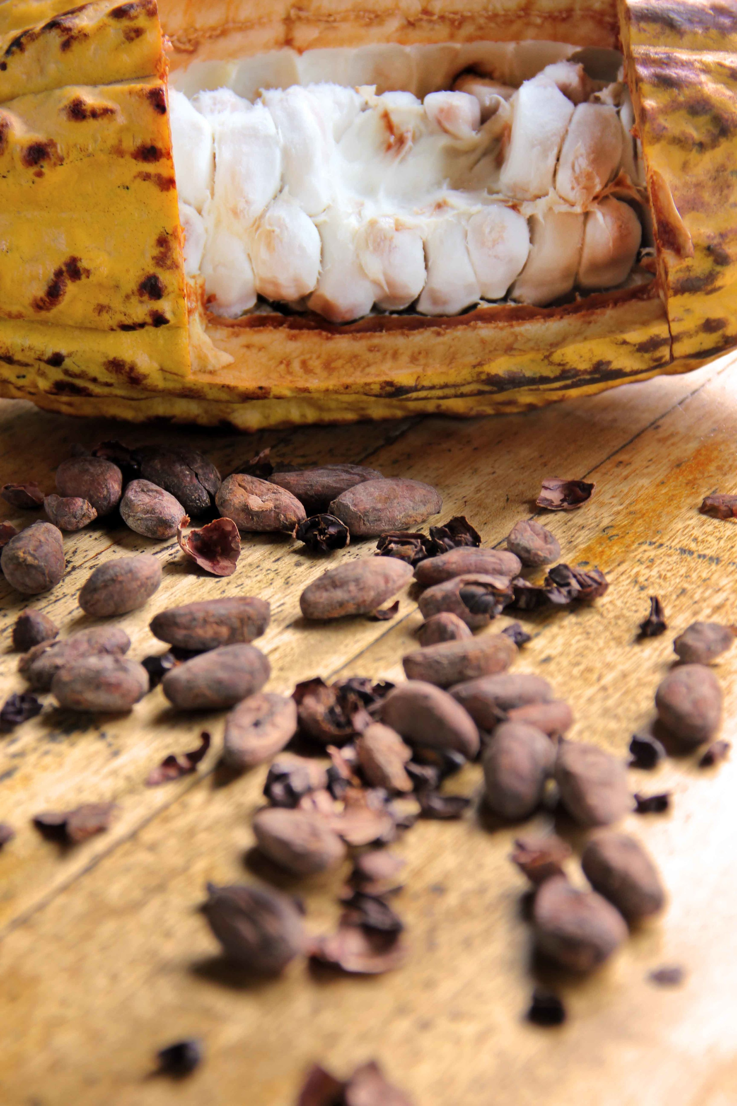 Mazorca de Cacao