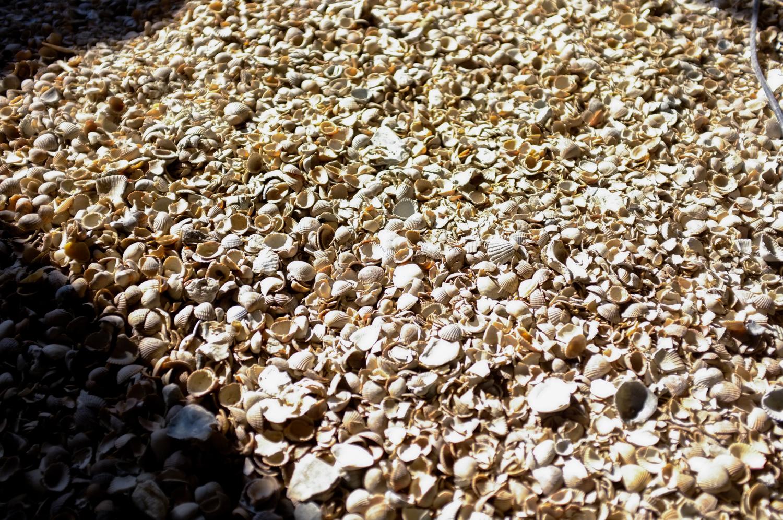 opbouw schelpen - kalkhennep - kalkchape