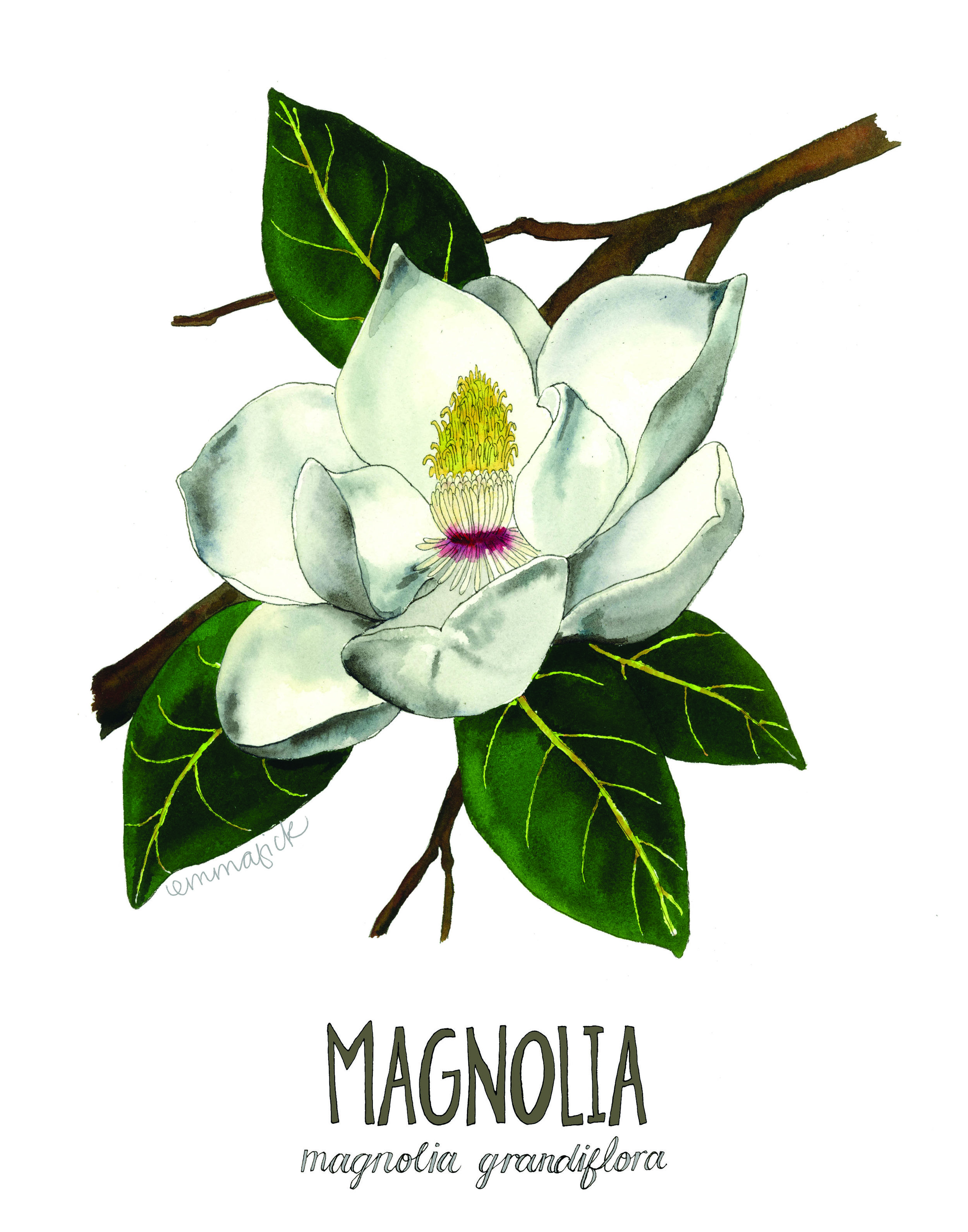 Magnolia with signature.jpg