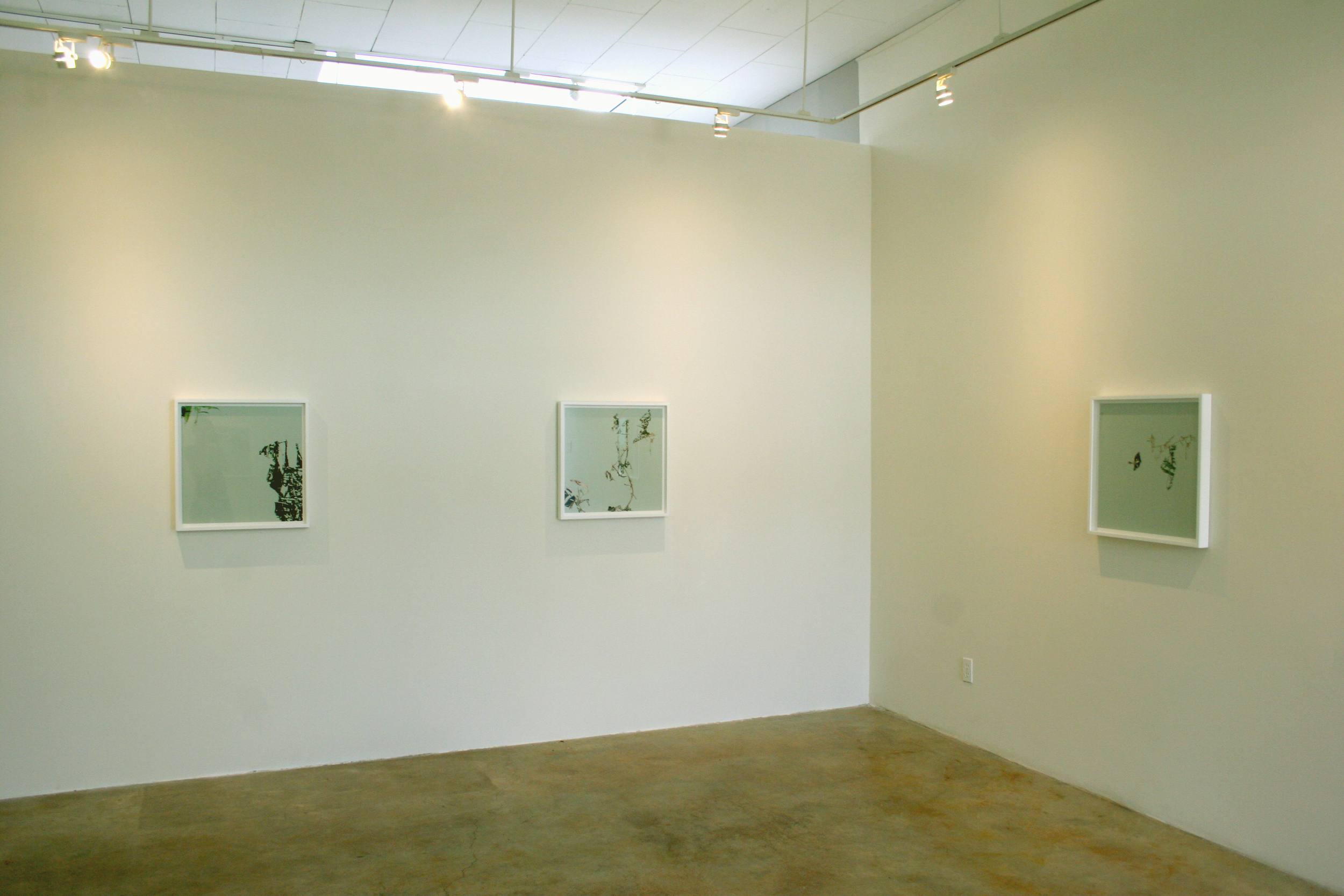 Cryptofloriography (installation view), 2007