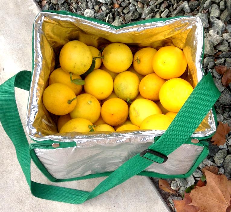 141214 meyer lemons.jpg