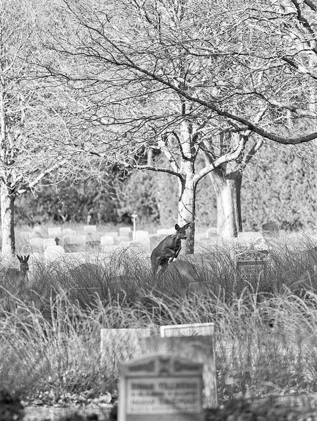 carmel_webb_skogskyrkogarden_2.jpg