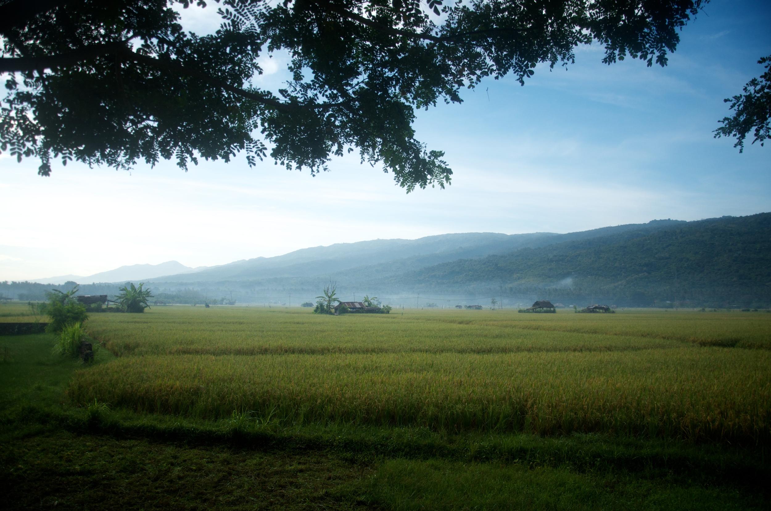 Indonesia 9.jpg