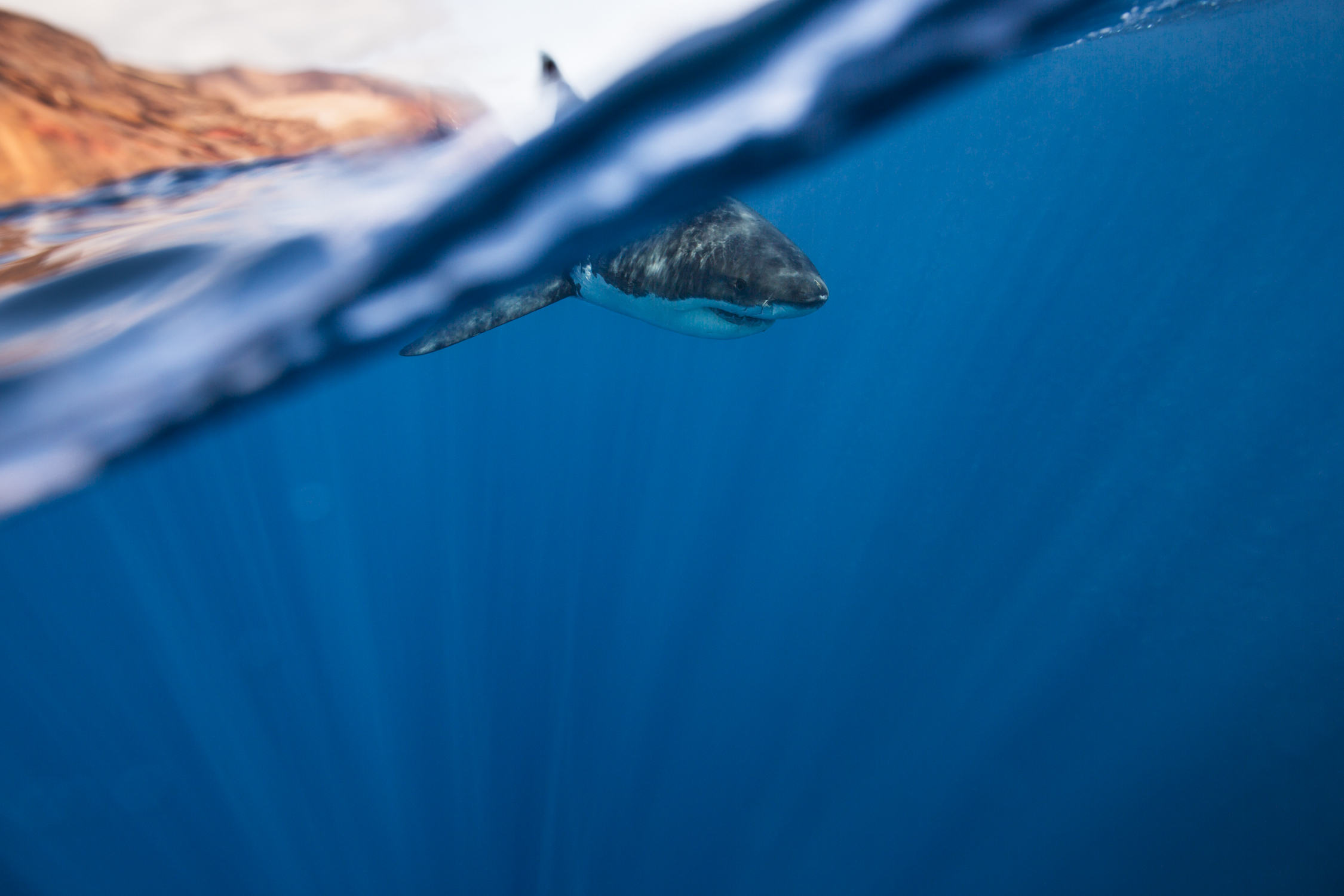 Corey-Arnold-Wolf-Tide-5,xlarge.2x.jpg