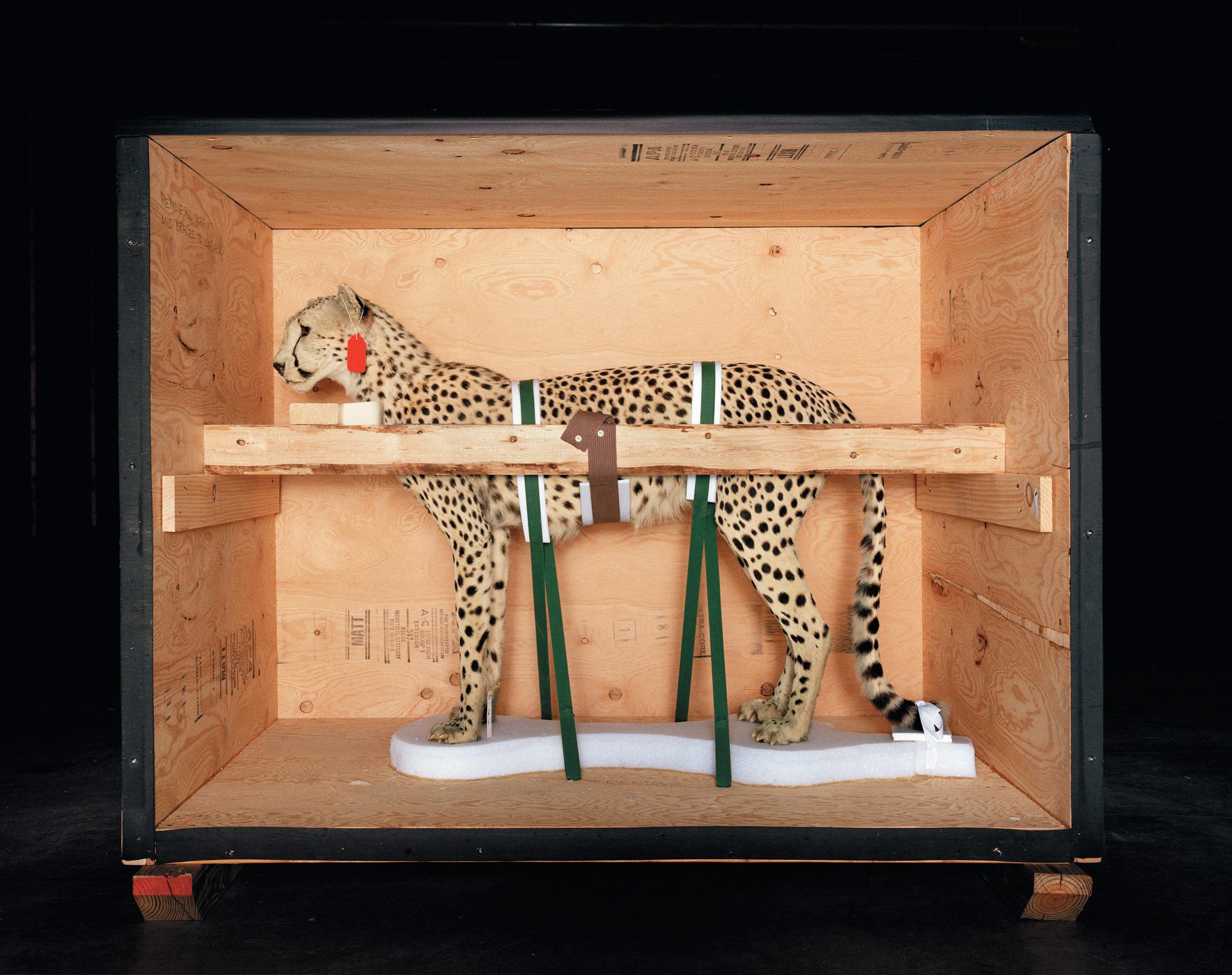 Smithsonian_Cheetah_CMYK.jpg