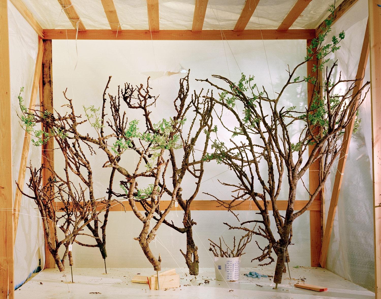 Trees_in_Crate_2008.jpg