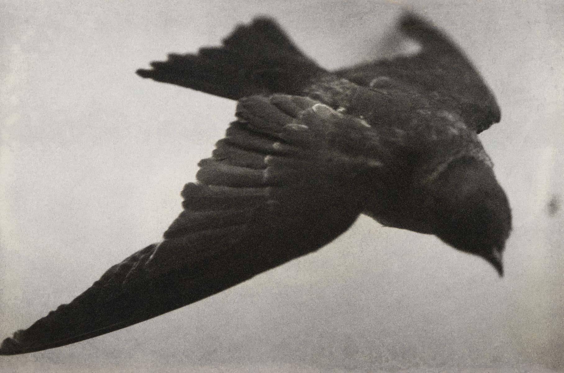 Pamela Reed - Blackbird