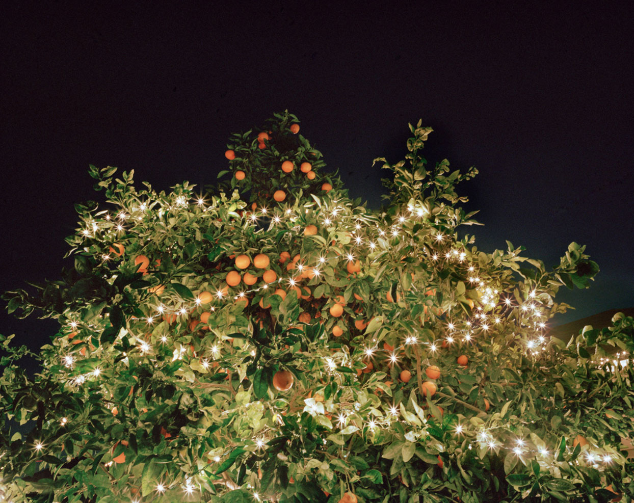 Mom's orange tree (2012),    from   We Wish That We All Have a Wonderful Life