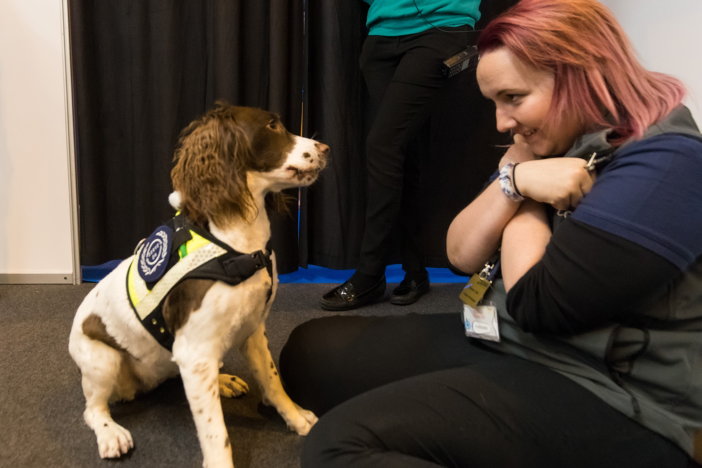 Serve On Search And Rescue Springer Spaniel Molly captivated guests at the BSAVA Congress for veterinary professionals in Birmingham.Picture by Paul Clarke Photography.