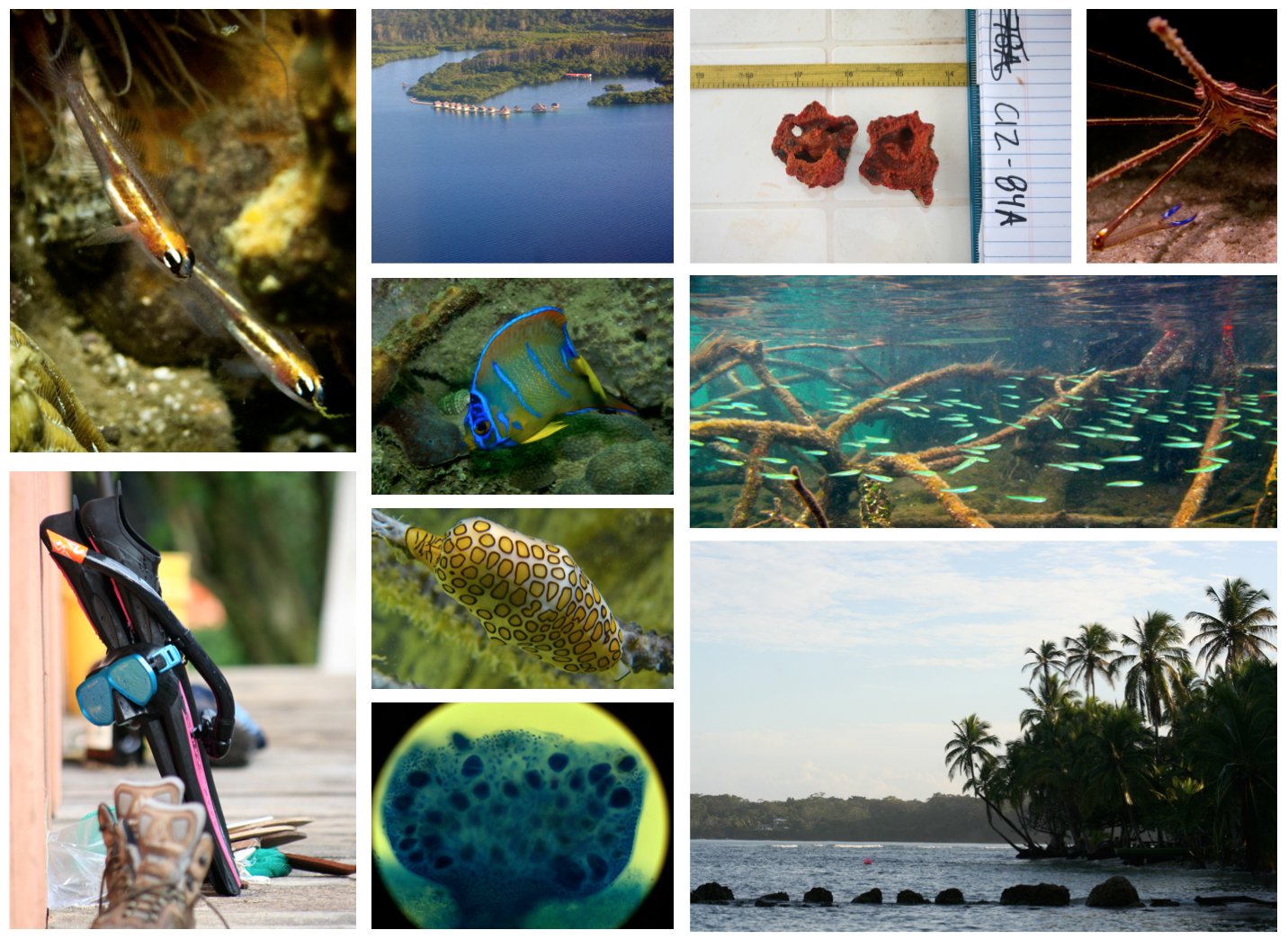 Tropical Marine Ecology.jpg