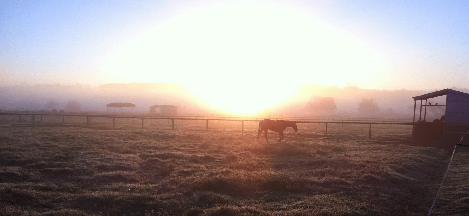 morninghorse.png