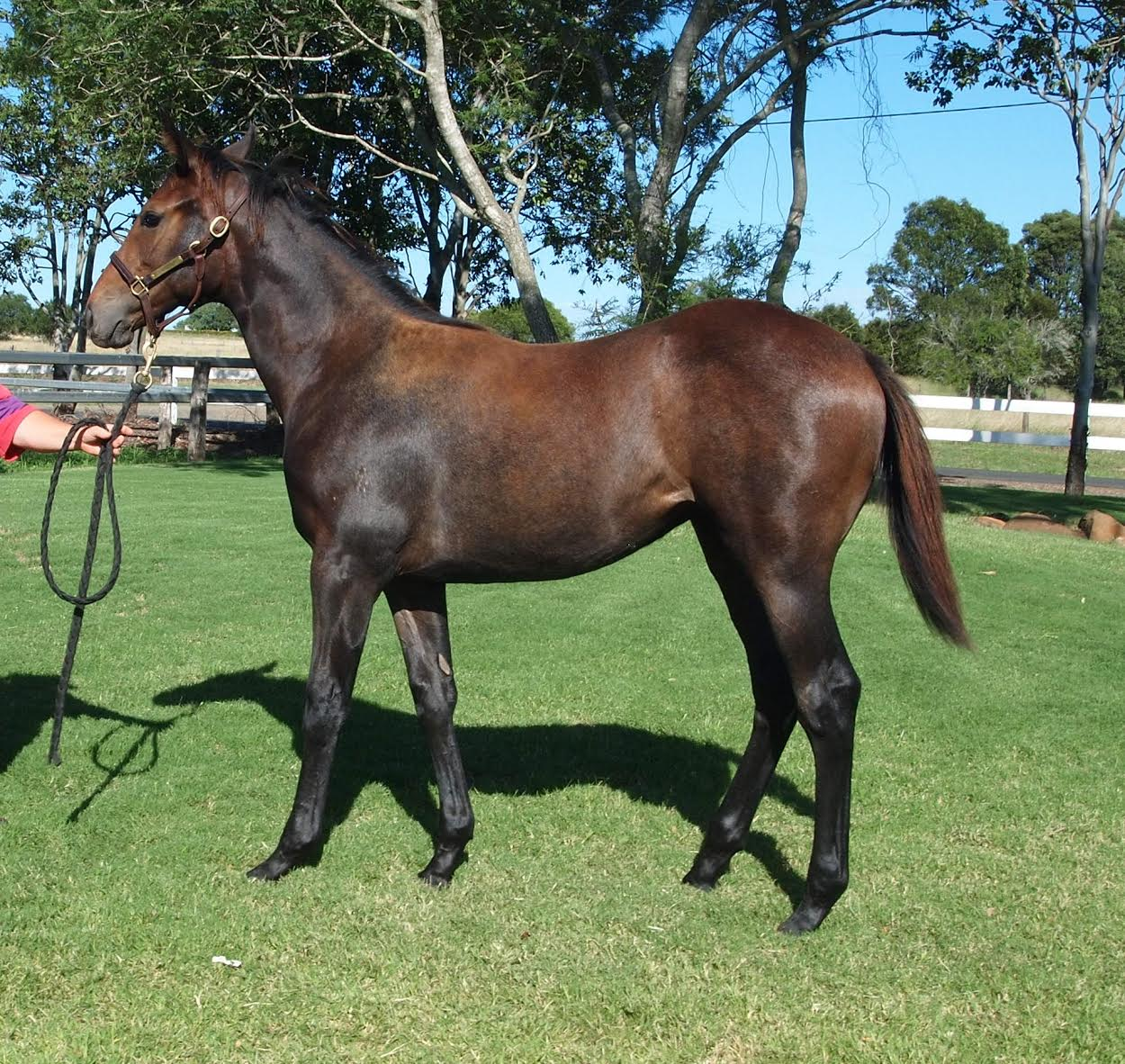 Top Echelon – SALE EVE weanling filly