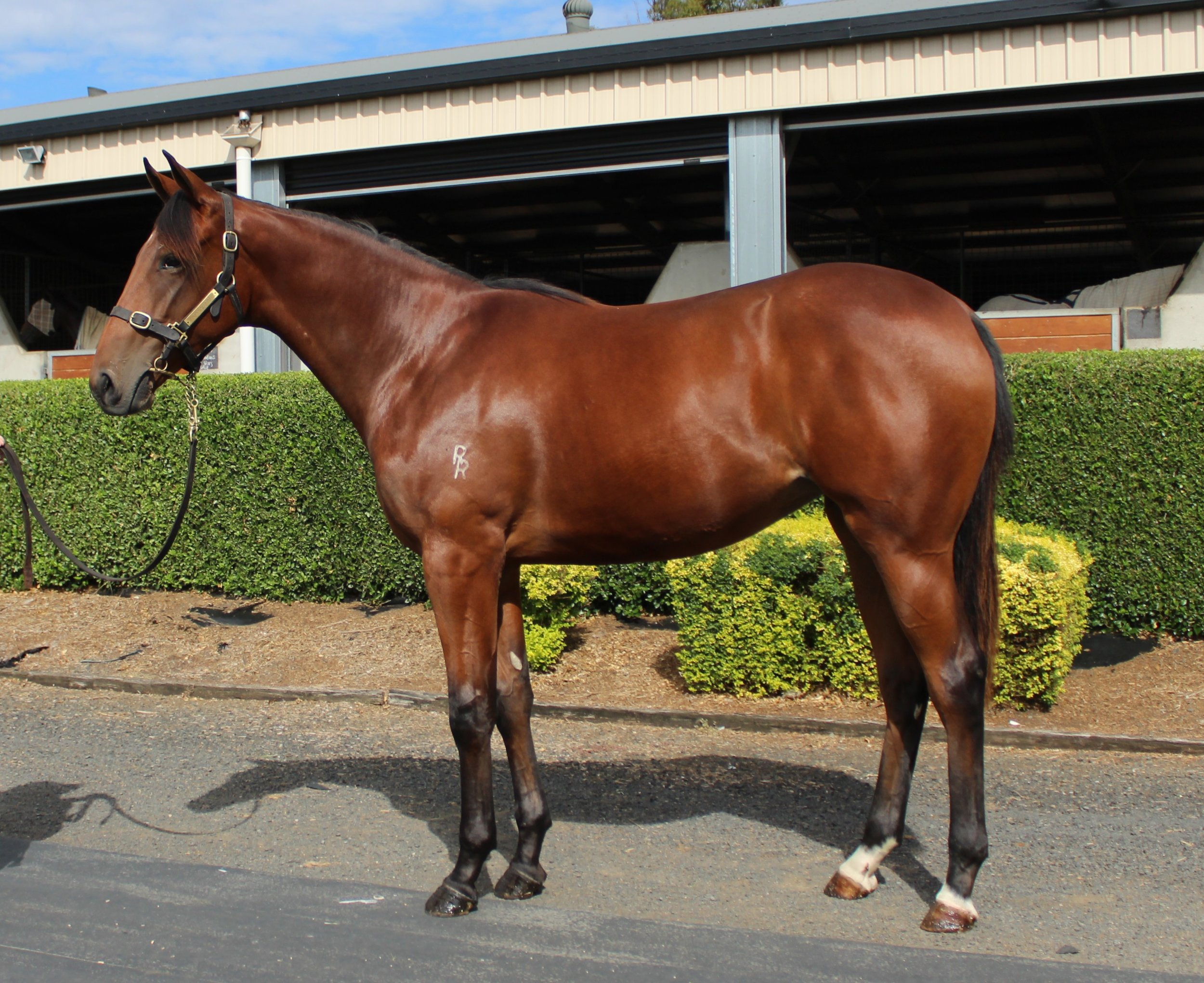 Lot 190 Top Echelon - Our Brightest Star