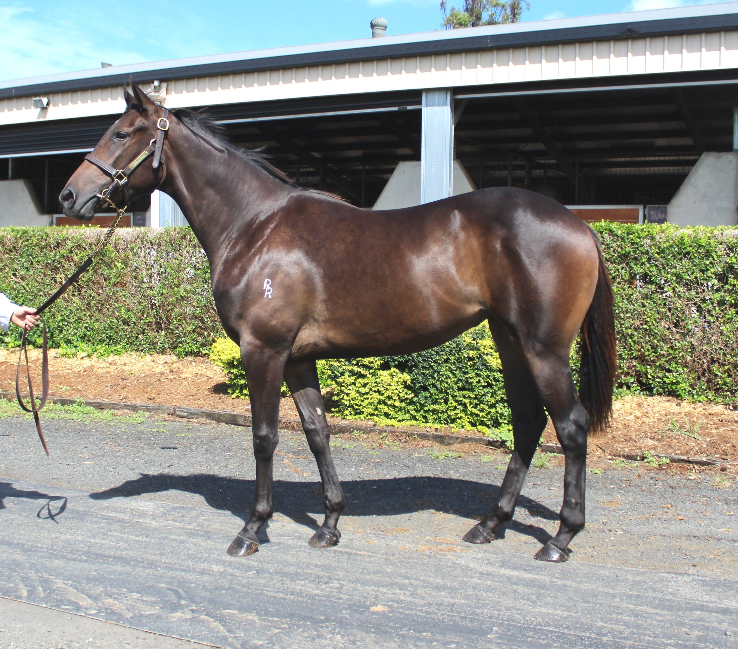 Lot 62 - So You Think x Milady Clang