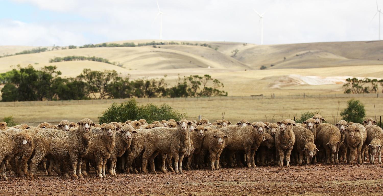 Livestock Consultant AgriPartner