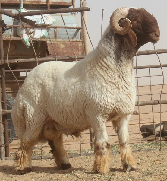 AgriPartner international livestock consulting