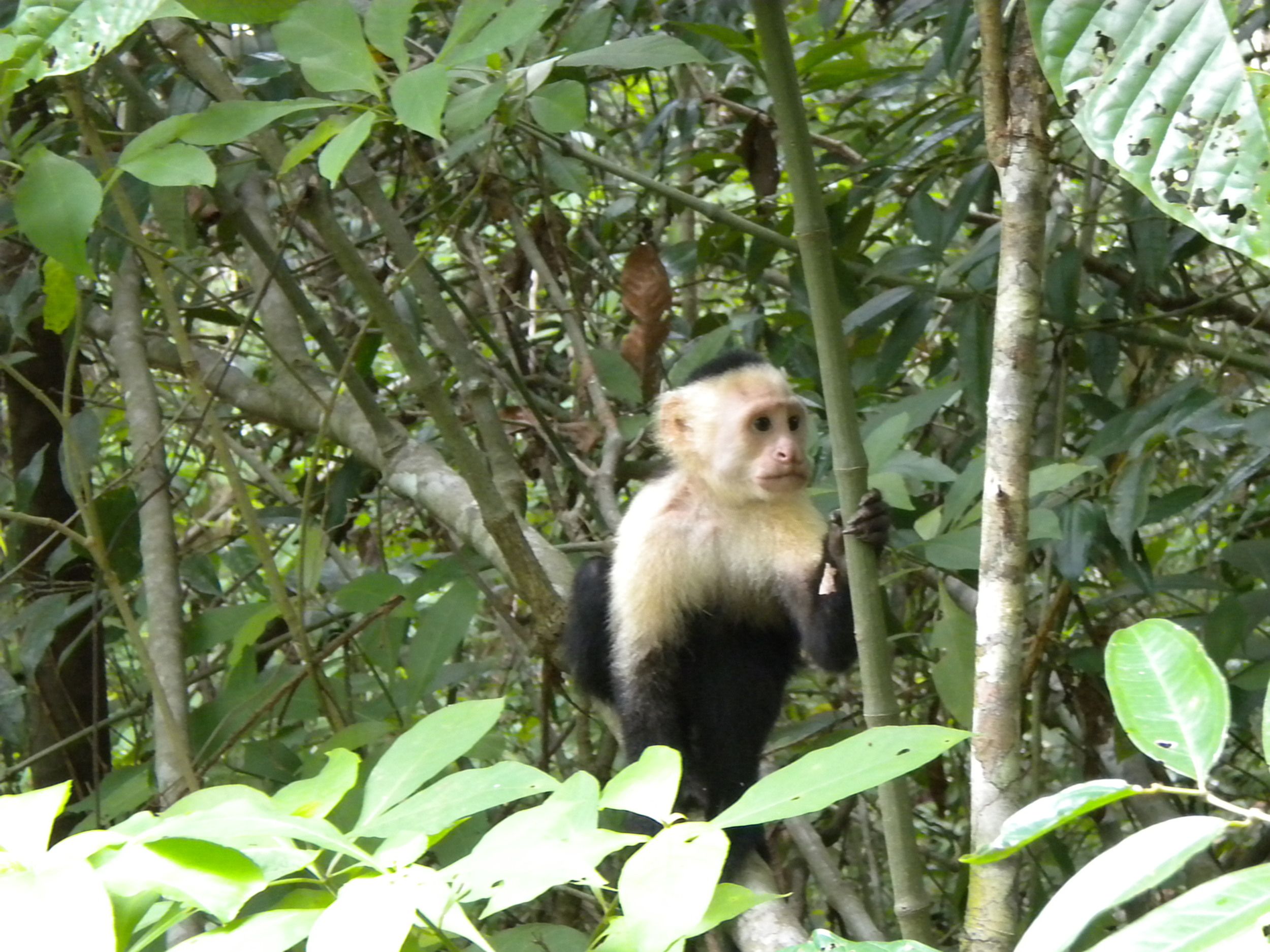 Say hello to my little friend, Parque Nacional Manuel Antonio, Costa Rica