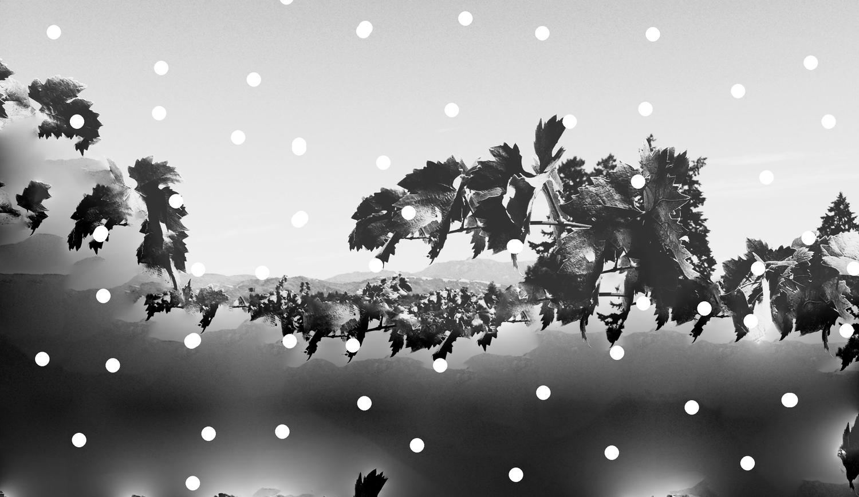 winepat dots.jpg