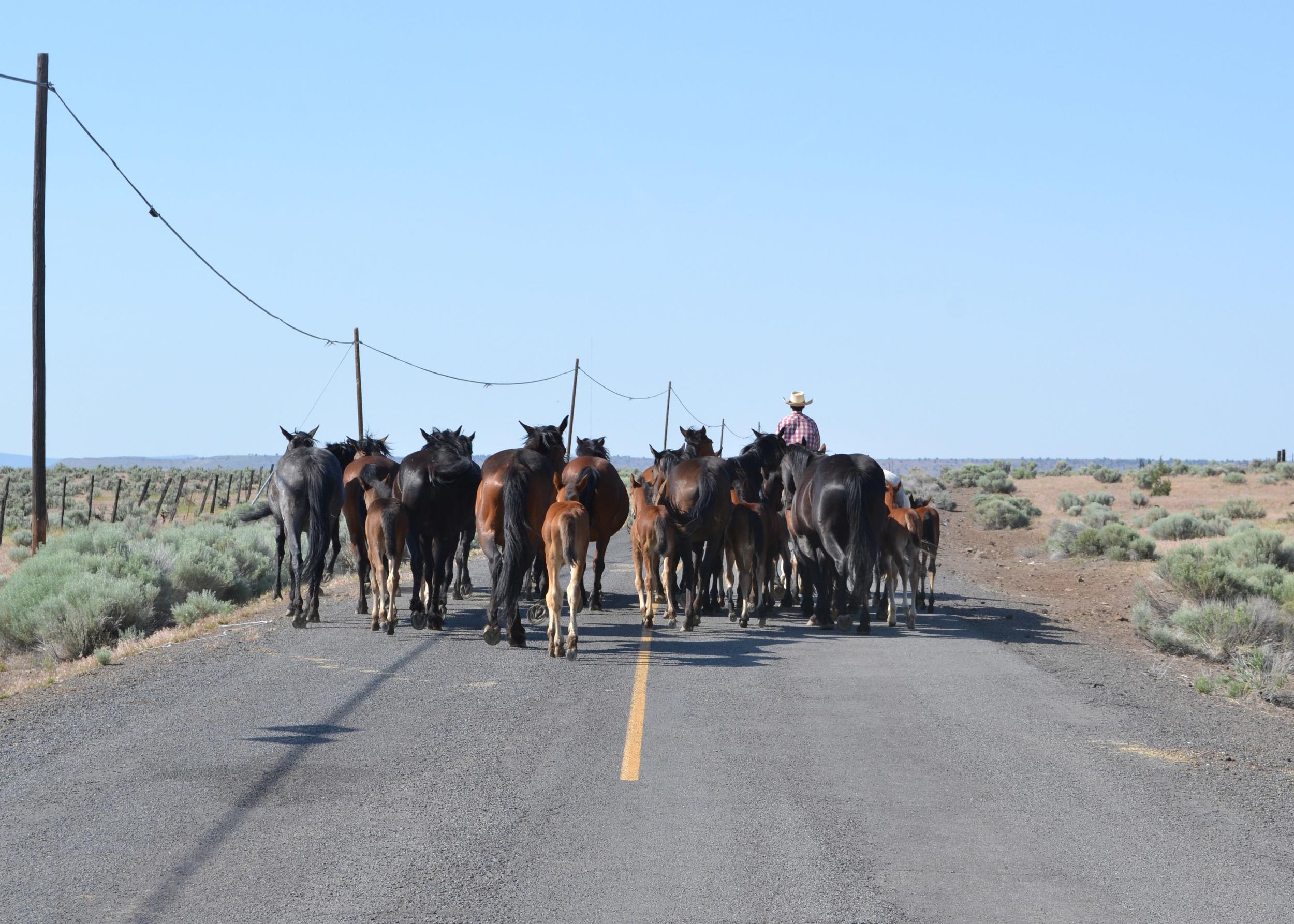 Summer Foals   Boxwood Avenue