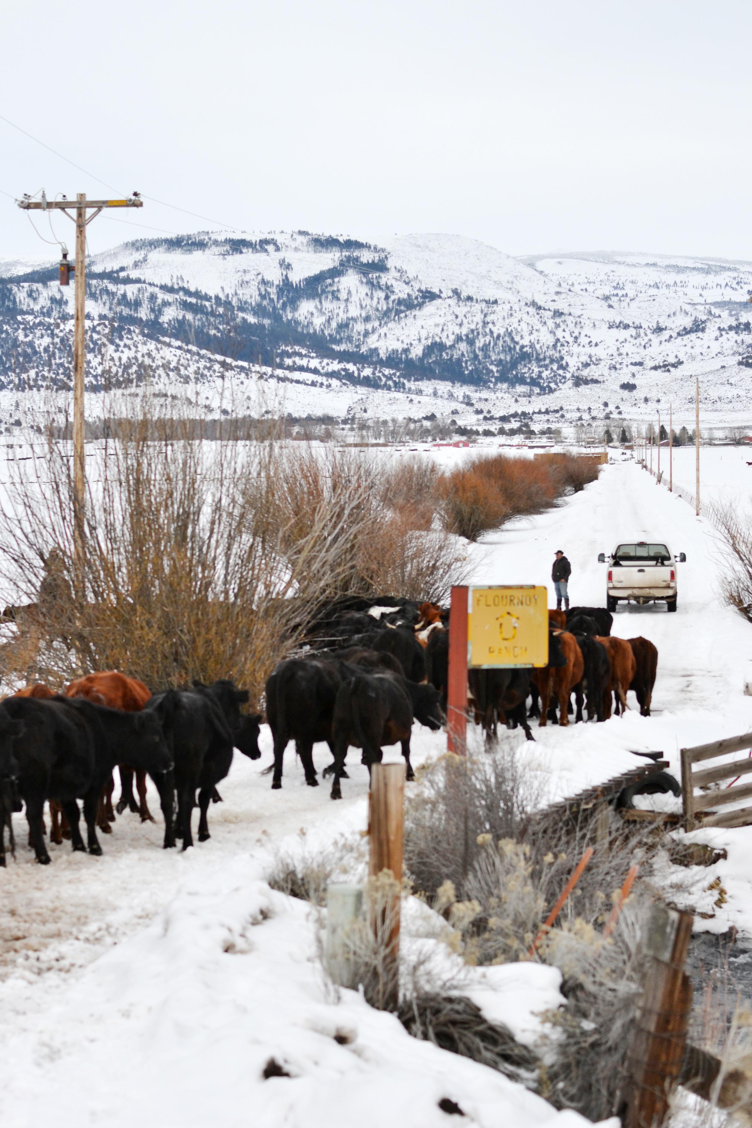 A Housewife on a Cattle Drive - boxwoodavenue.com