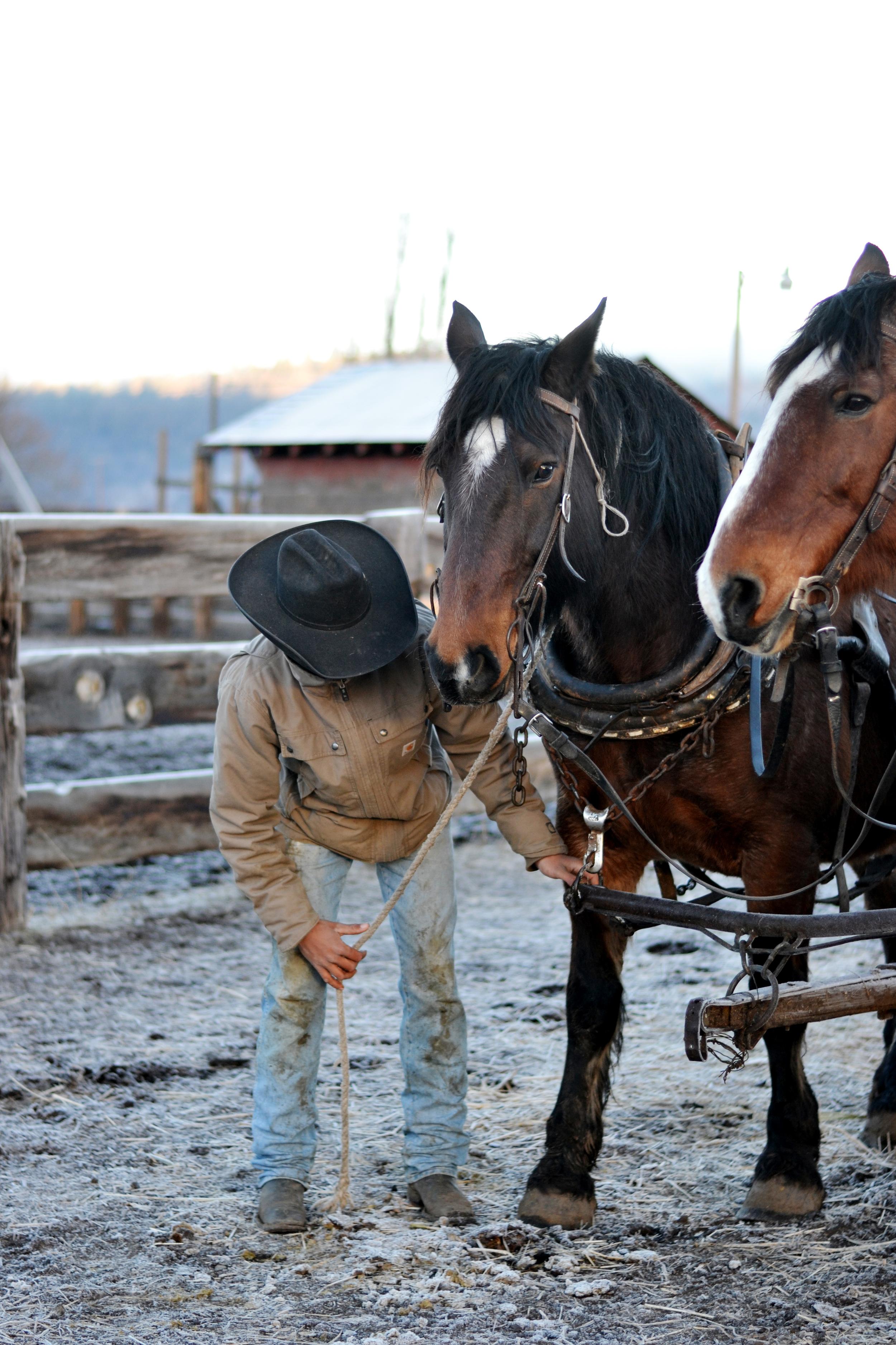 Boxwood Avenue's Ranch | Cowboy & Work Horses