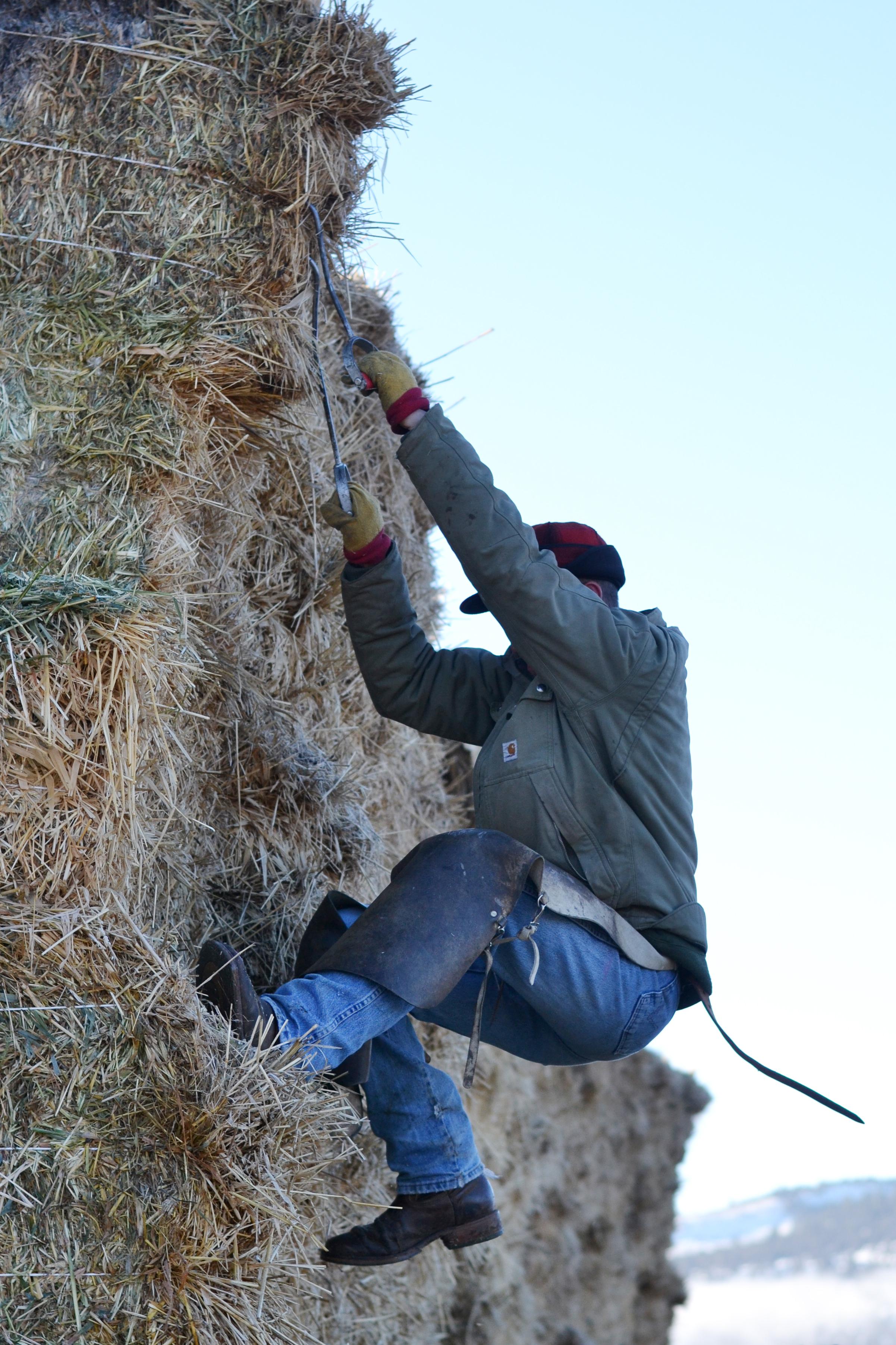 Boxwood Avenue's Ranch | feeding hay