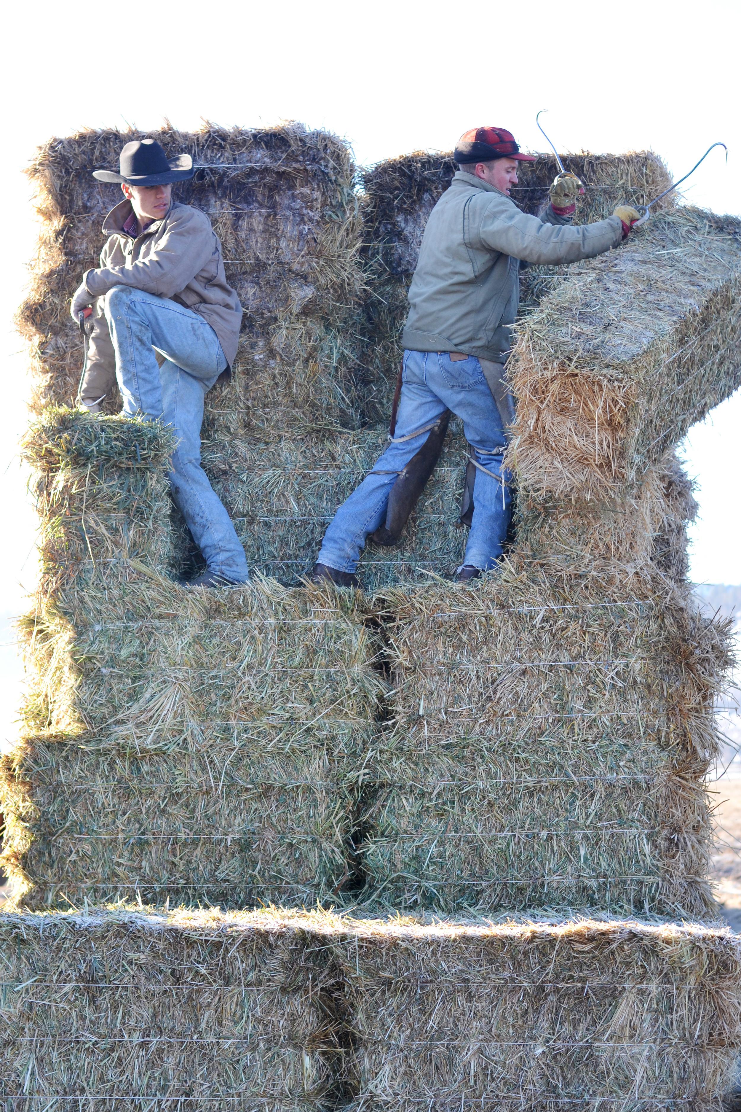 Boxwood Avenue | Feeding hay