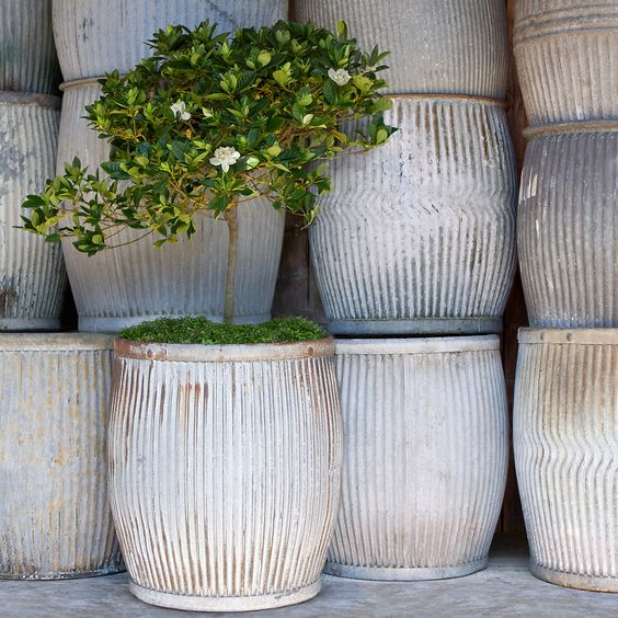 Zinc planter from shopterrain.com | How to Train Shrubs to be Trees