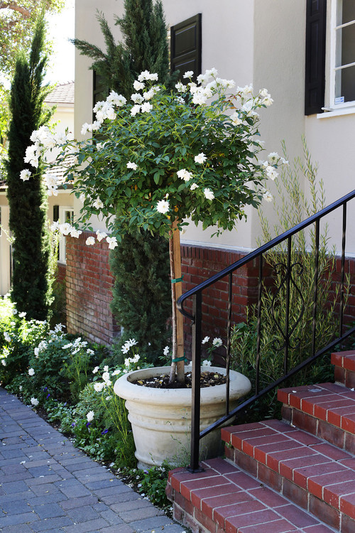 Cindi Carter designs by Stephanie Wiley Photography | How to Train a Rose Bush on boxwoodavenue.com