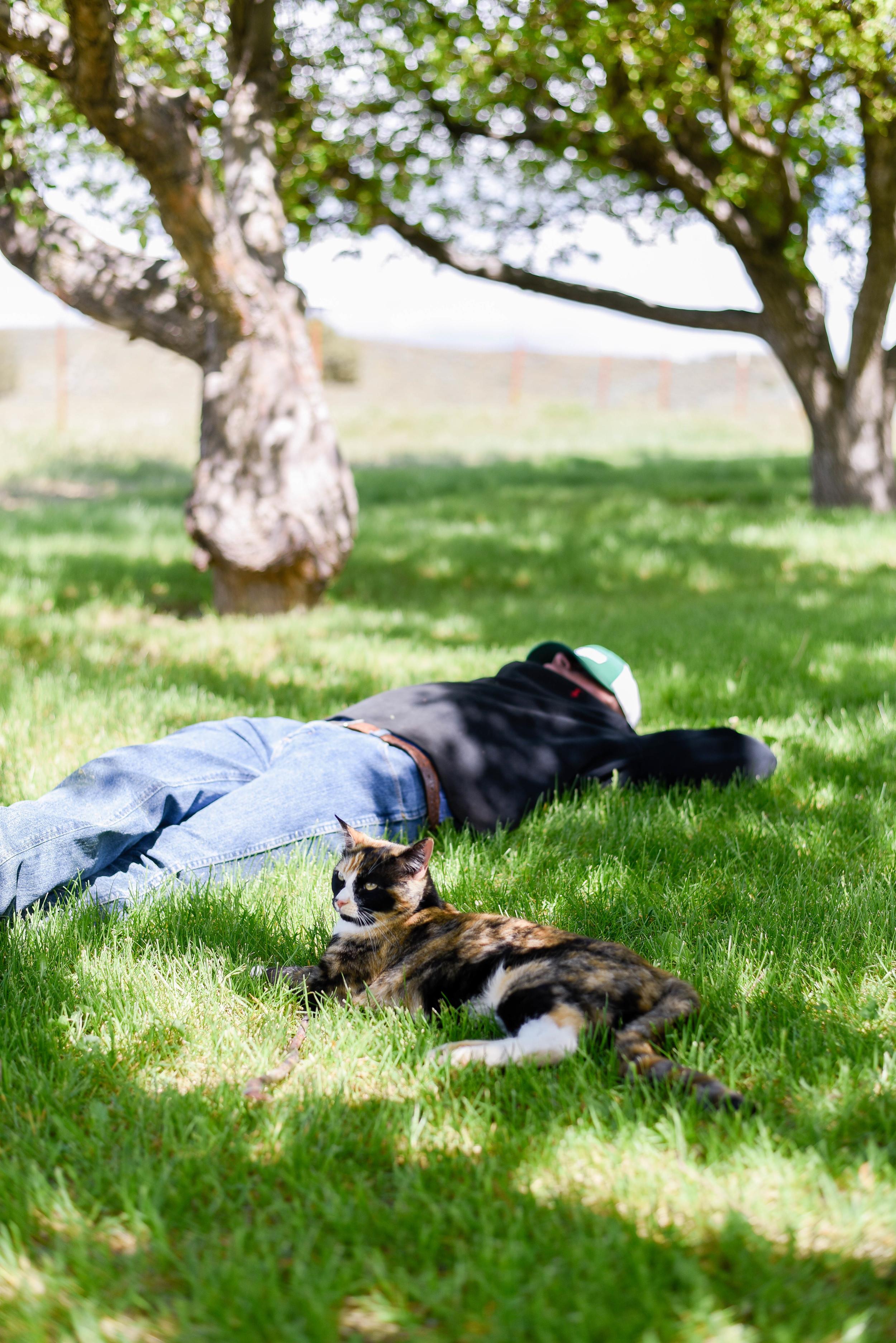 Nap under the apple tree   boxwoodavenue.com