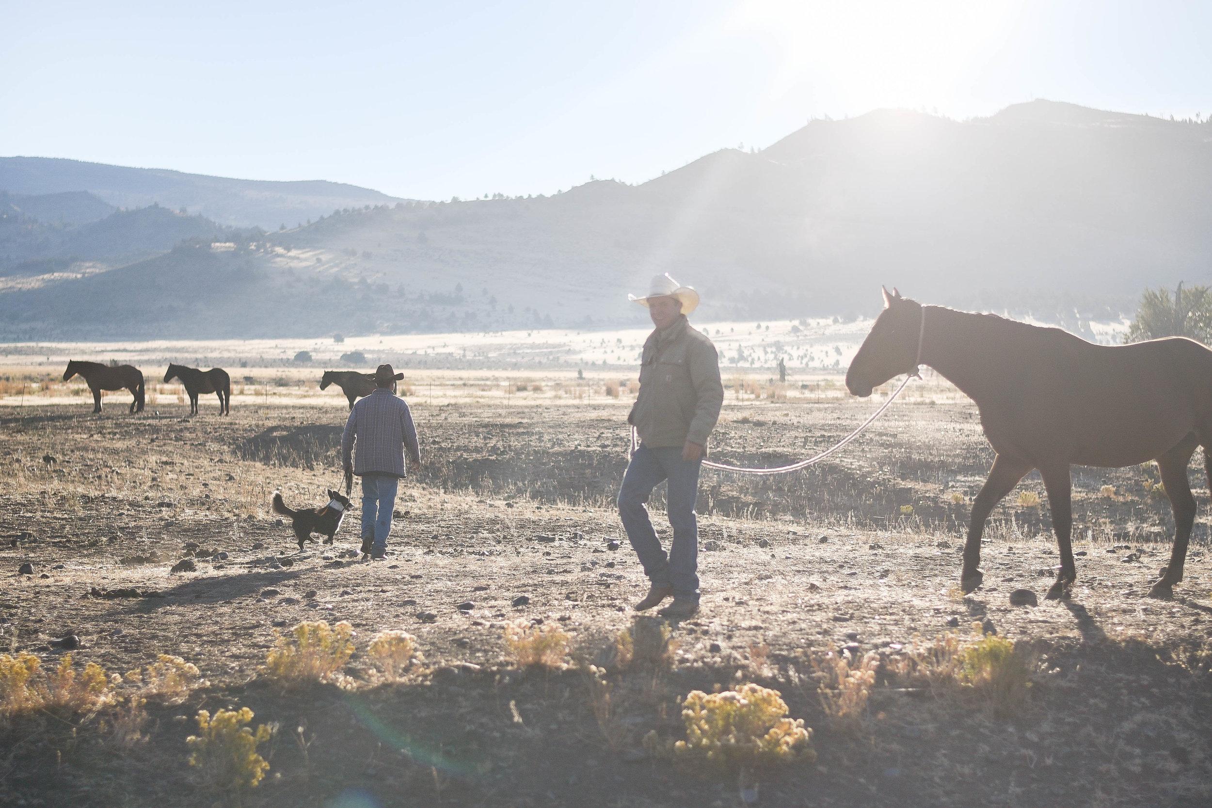 Boxwood Avenue   Ranch