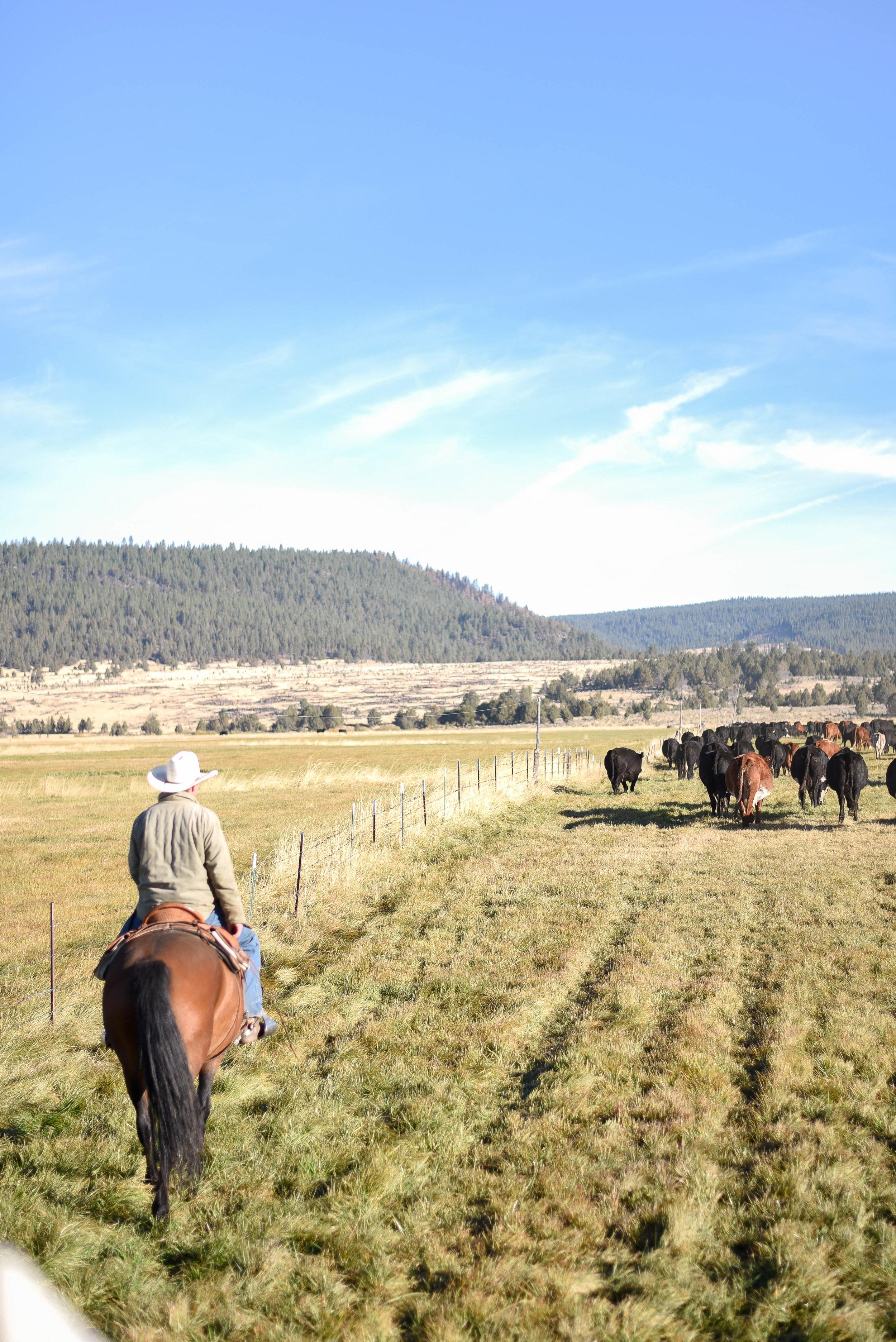 Boxwood Avenue   Ranch Life