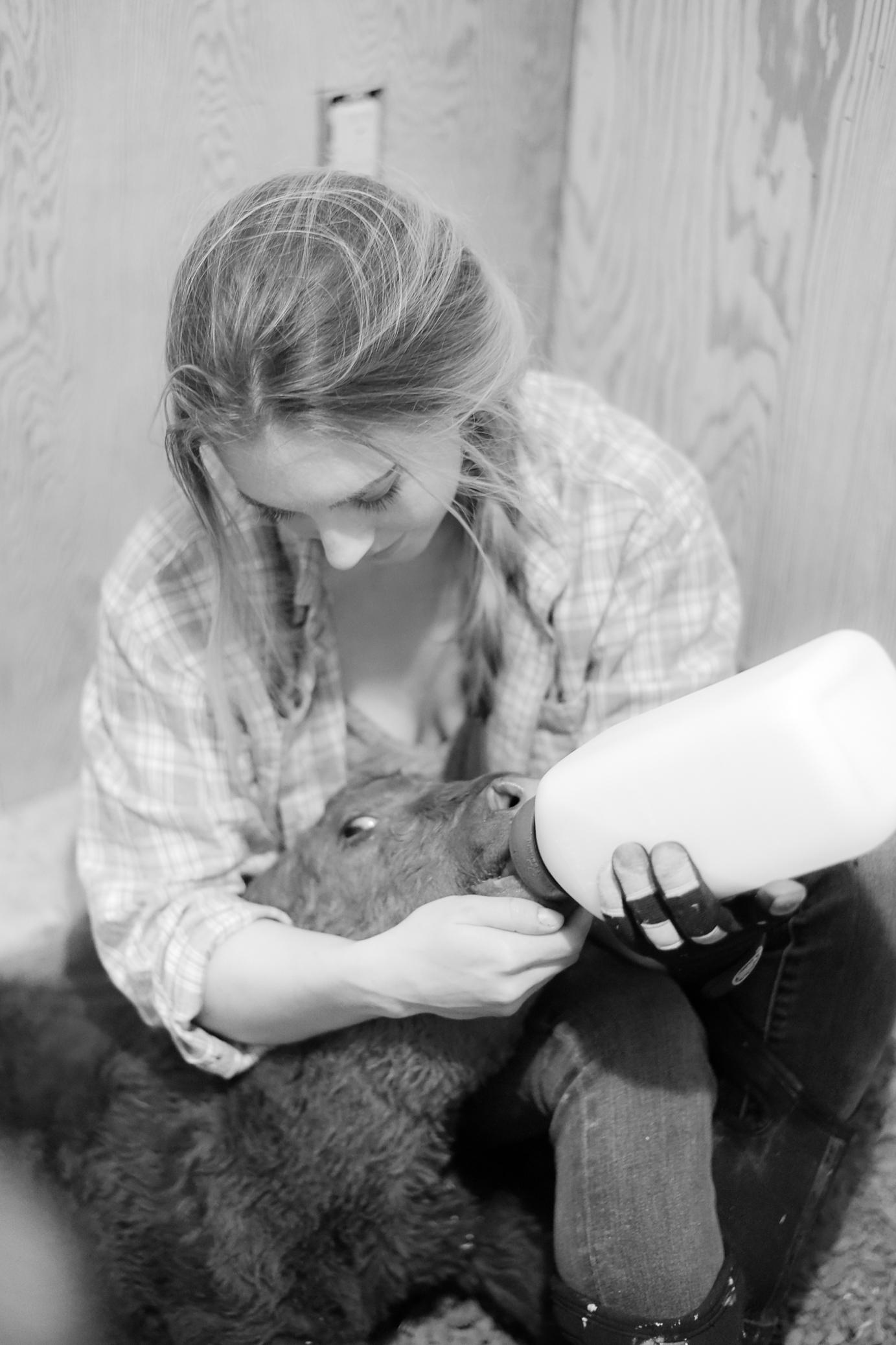 Bottle Baby Calf | Skin Graphing | boxwoodavenue.com