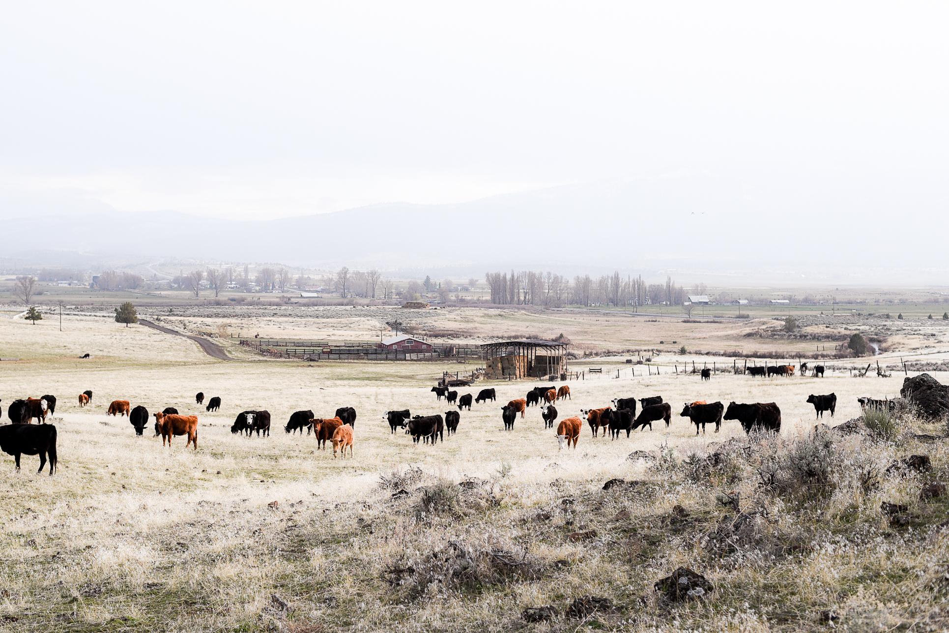 Calving Season on the Ranch | boxwoodavenue.com