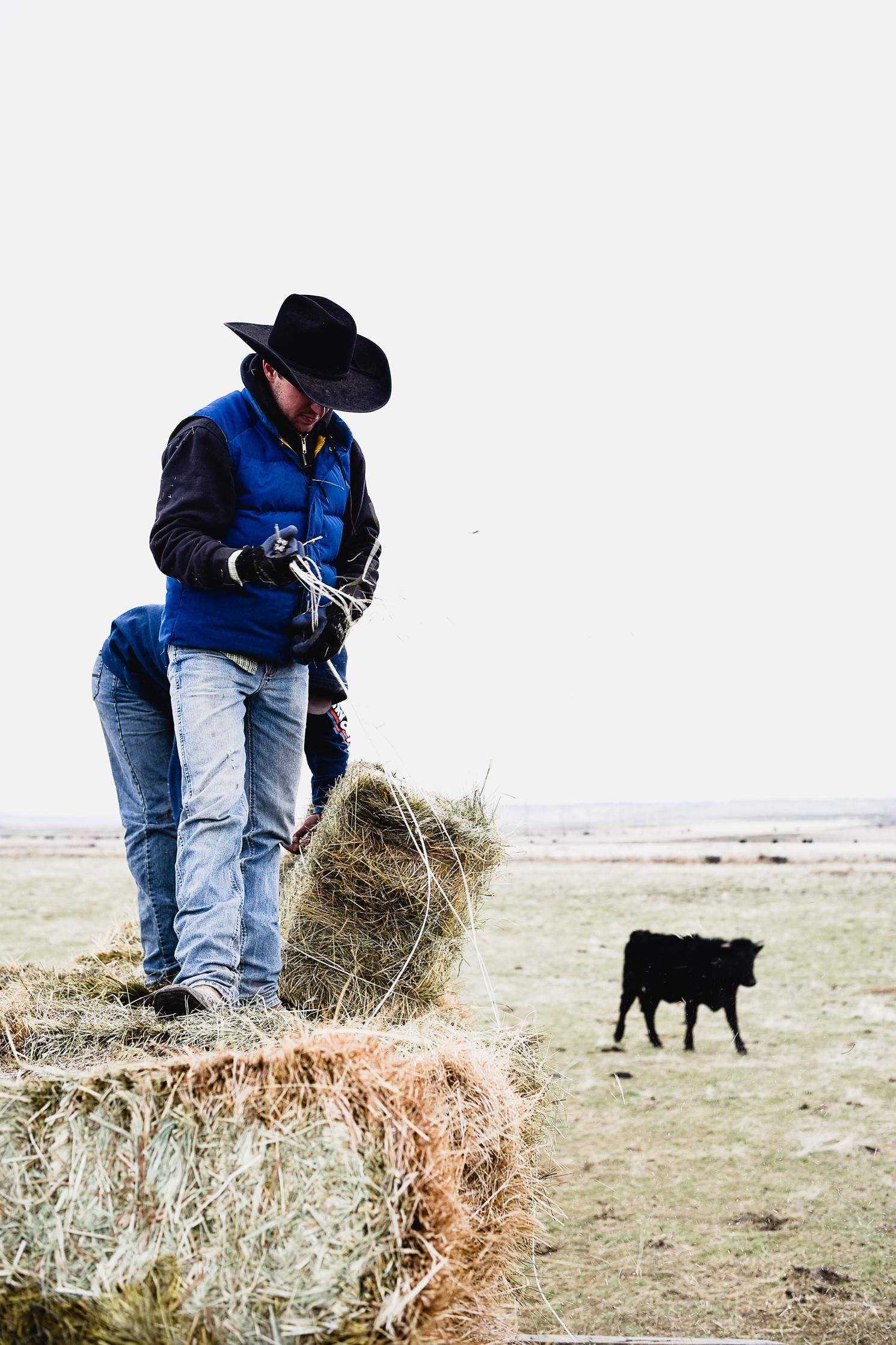 Feeding hay on cattle ranch | boxwoodavenue.com
