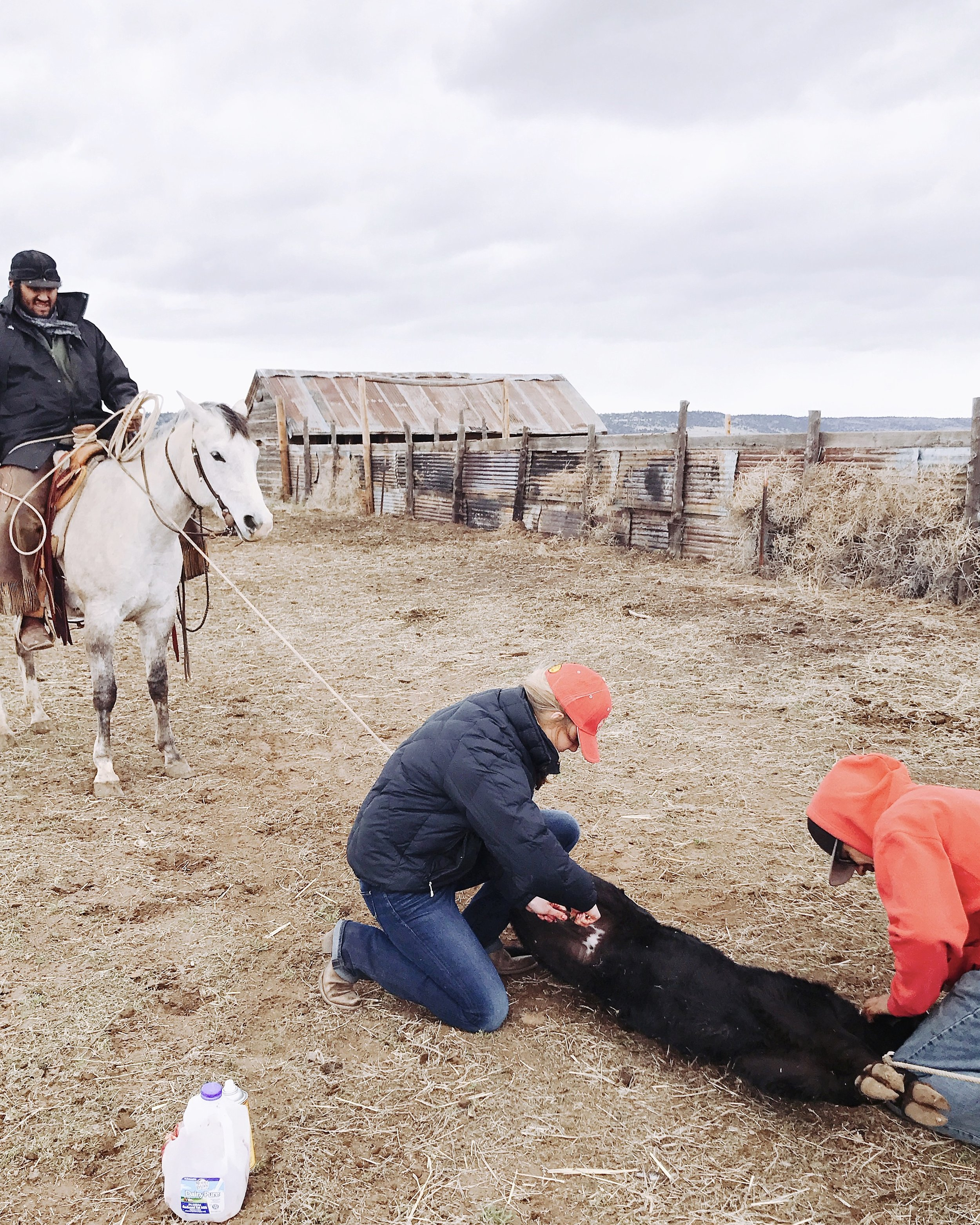 Branding at a Cattle Ranch in Modoc County | boxwoodavenue.com