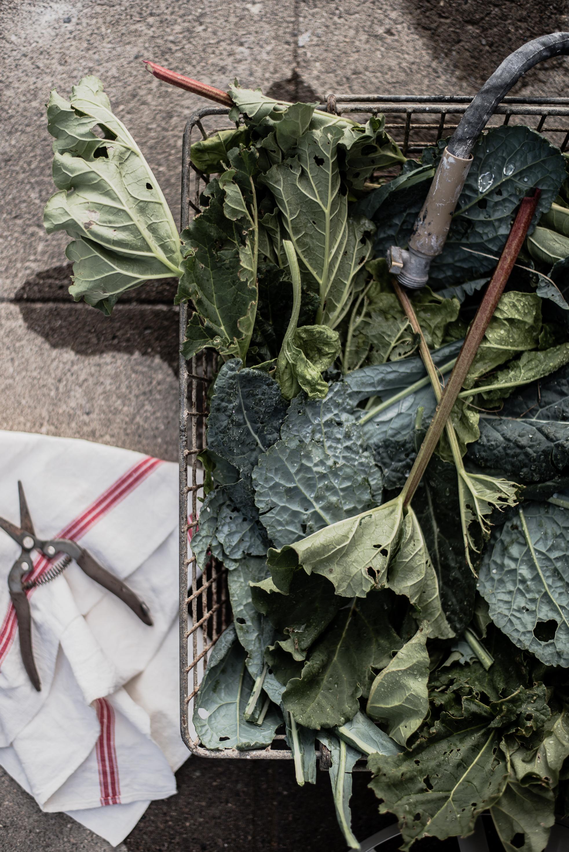 Beautiful rhubarb & kale in french basket | boxwoodavenue.com