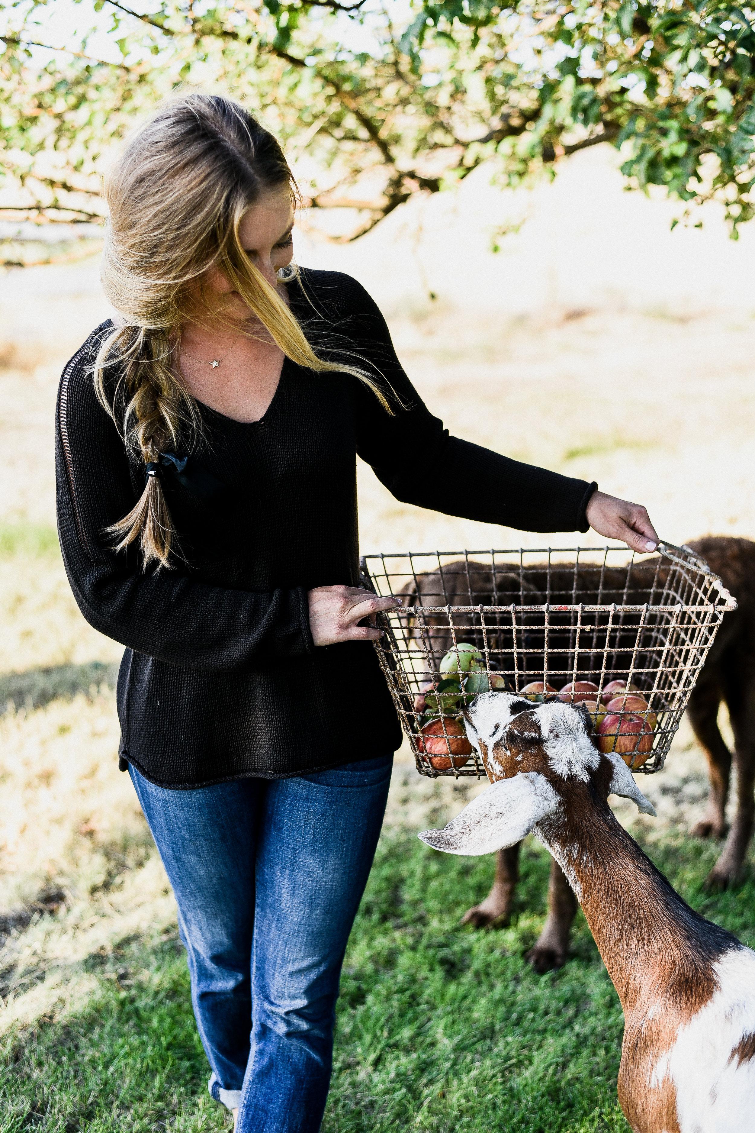 Boxwood Avenue apple harvest with goats & chickens | boxwoodavenue.com