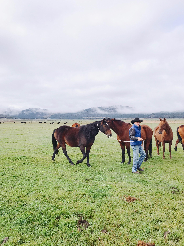 Western lifestyle horses   boxwoodavenue.com