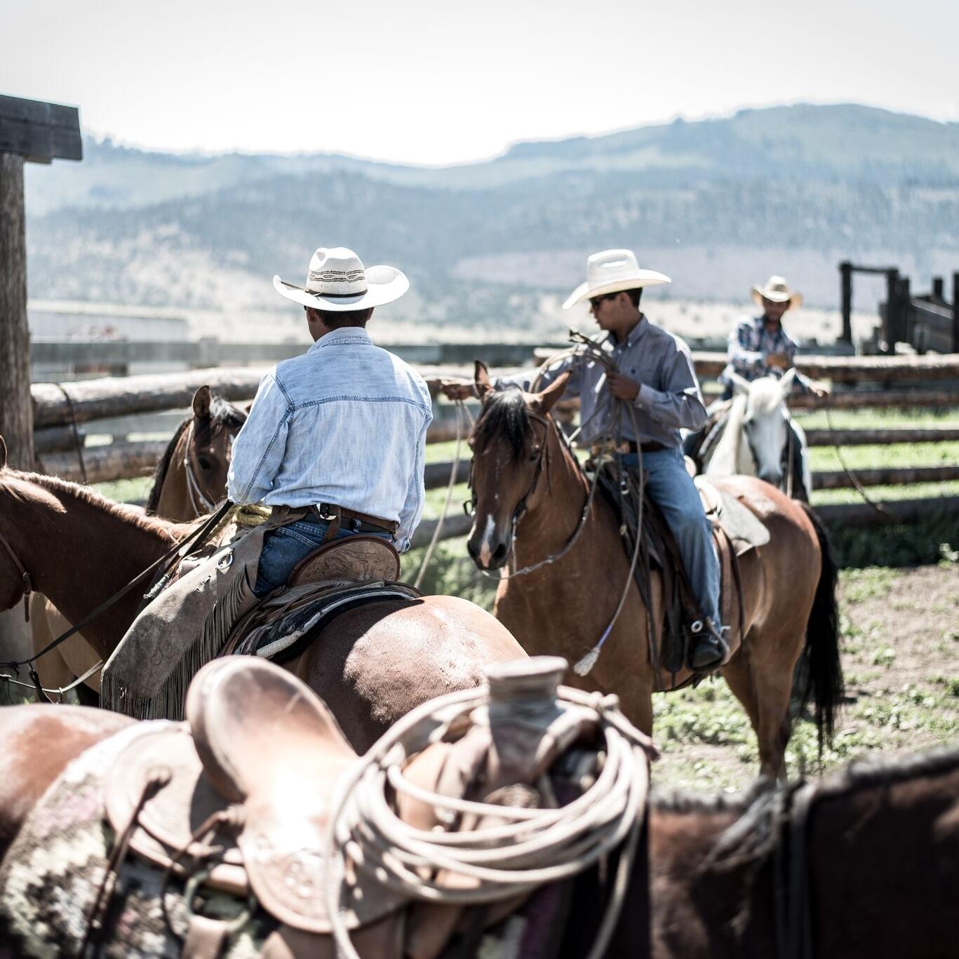 Northern California Cattle Ranch - farmhouse blog boxwoodavenue.com
